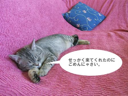Sorry, I'm sleeping ...